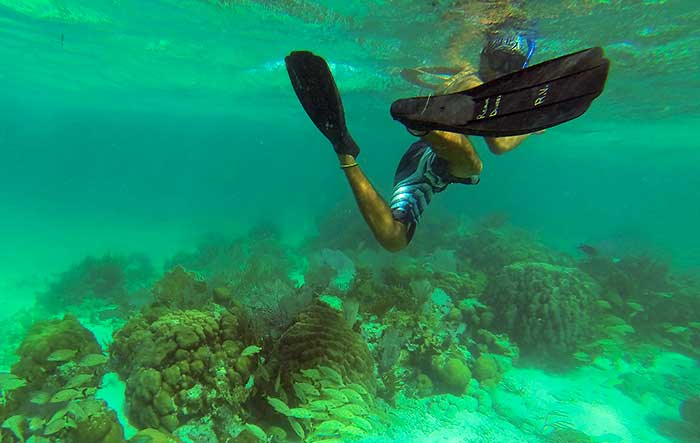 Snorkling over reef